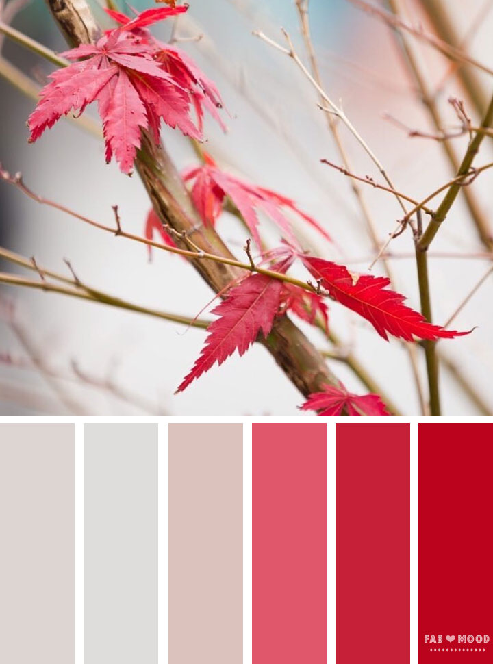 Autumn winter color palette inspired by autumn leaves