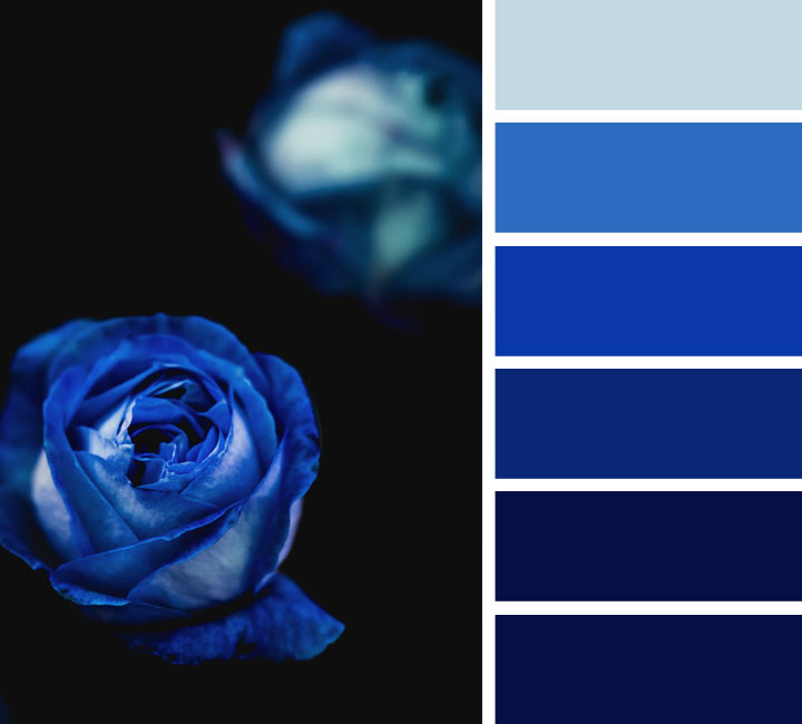 midnight blue and royal blue color scheme #color #colorpalette #midnightblue #royalblue