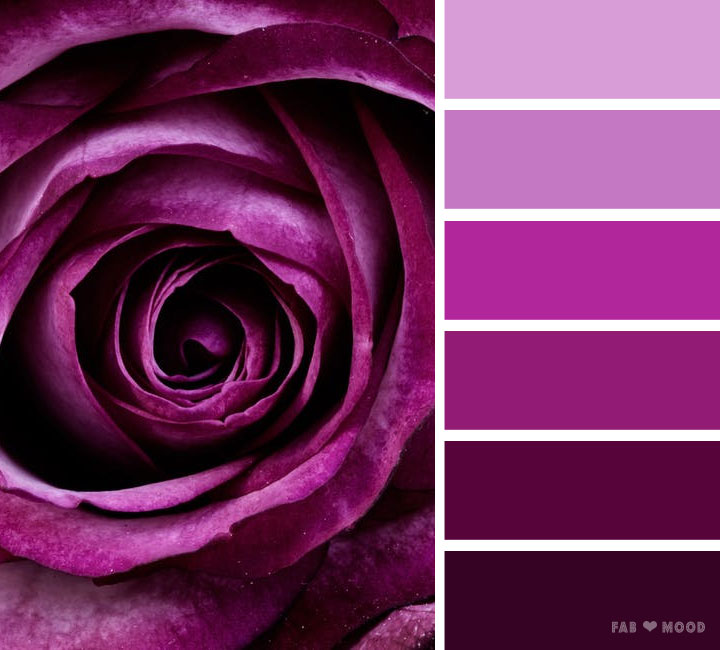 Purple rose color scheme