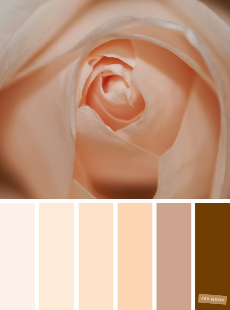 Color Inspiration : Blush + neutral brown #color #colorpalette