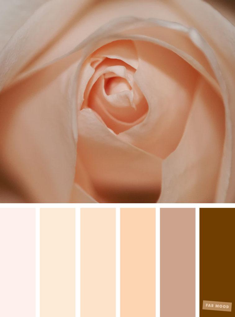 Color Inspiration : Blush + neutral brown