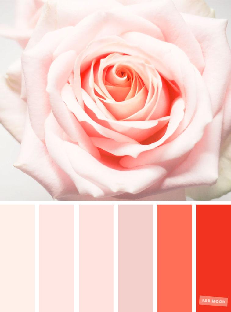 Blush Tones : Pretty Blush Color Scheme