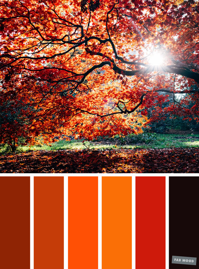 59 Pretty Autumn Color Schemes { Orange Autumn Color Scheme }, color palette #color #colorscheme #colorpalette #fall #autumncolour #autumn #fallcolor