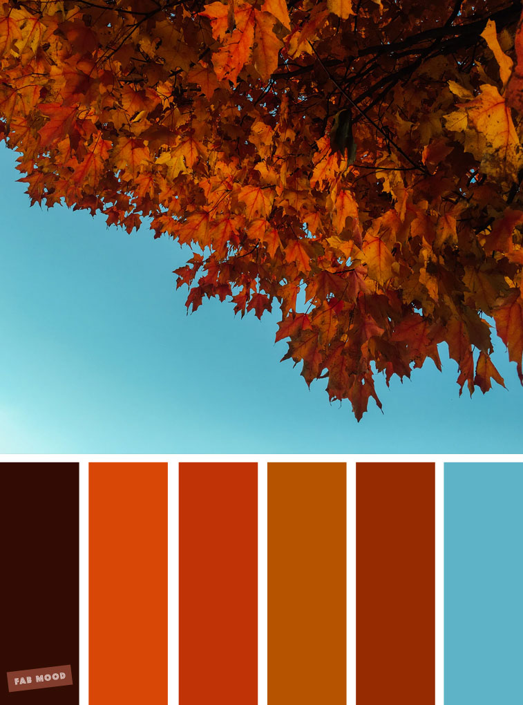 59 Pretty Autumn Color Schemes { Bold autumn colour and blue sky }