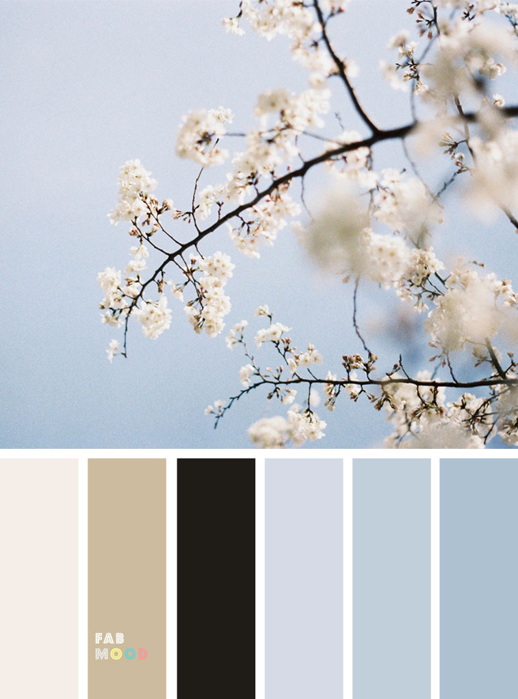 Pretty Spring Color Schemes { Black + Light Blue }