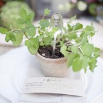 herb place setting, plant place setting,wedding table details,wedding table decors ideas