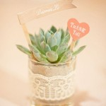 succulent wedding favors,wedding favours ideas,handmade wedding favors,diy wedding favors,unique wedding favors, homemade wedding favors,inexpensive wedding favors ,eco wedding favors