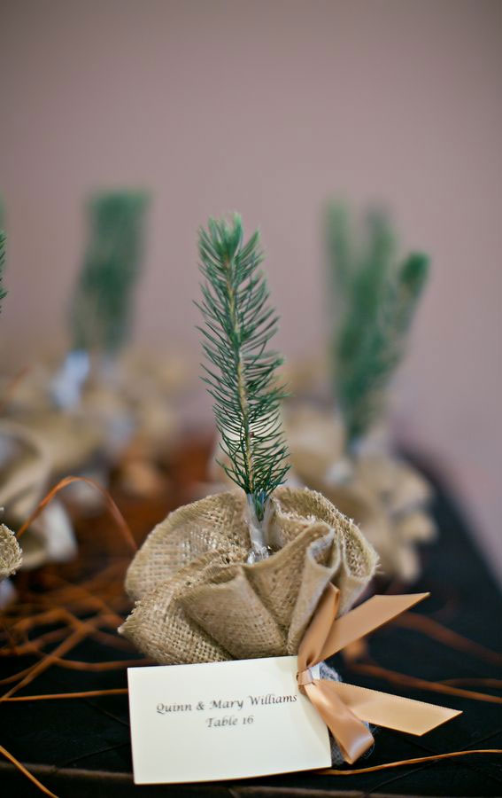 small plant wedding favors, pine tree wedding favors, winter wedding favors, plant wedding favors