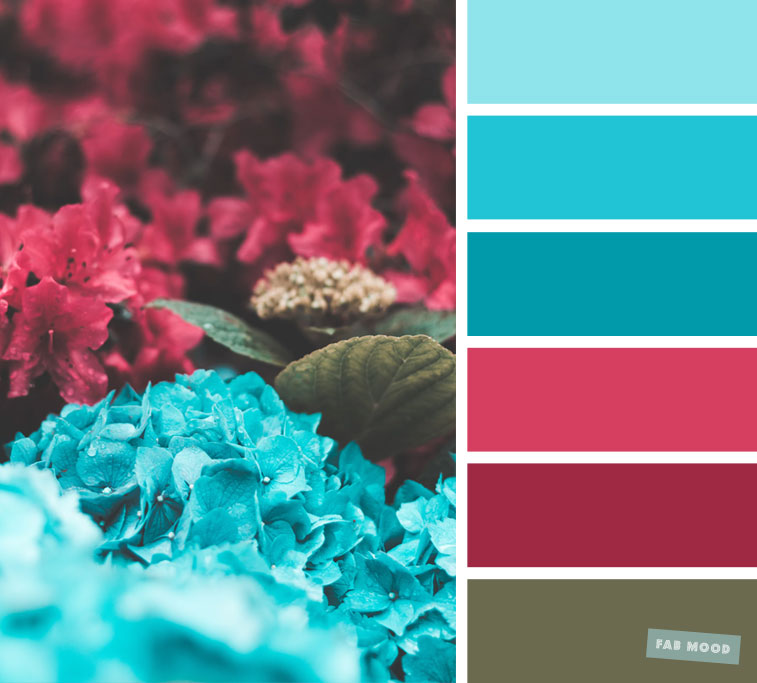 Dark Pink and Blue hydrangea Color Scheme
