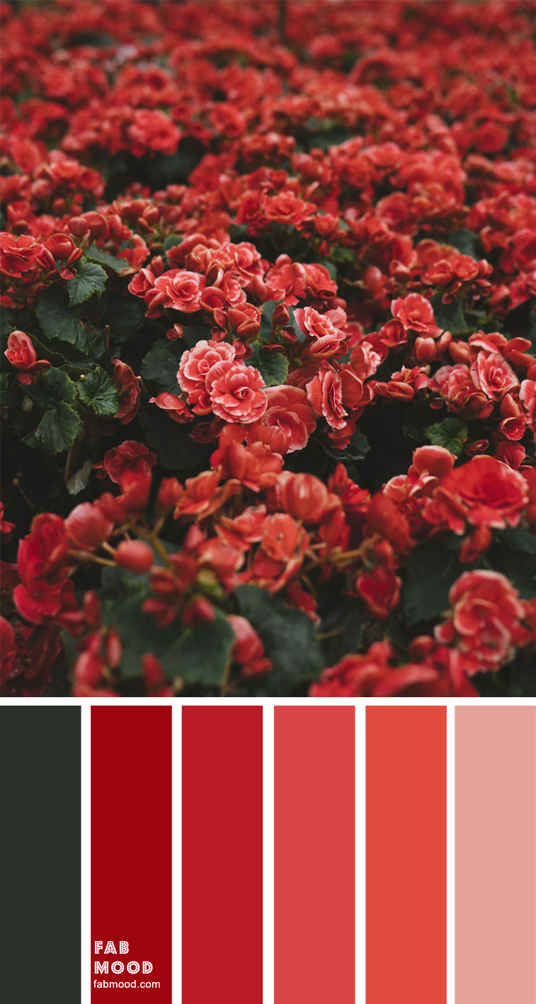 Red Color Combo – Color Palette #35