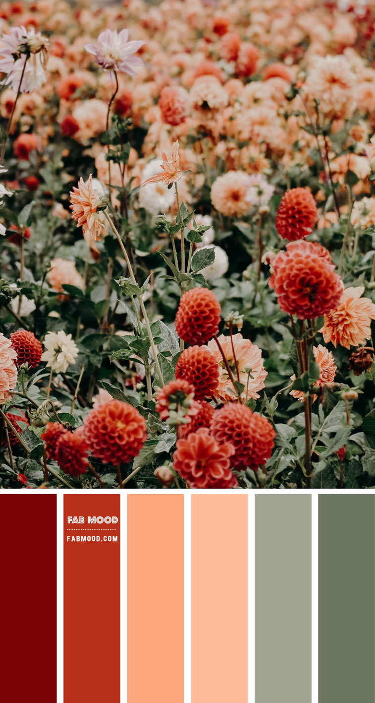 peach and sage color palette, red peach and sage color scheme, peach sage color scheme, color combo, peach and sage color combo, peach and sage color combination, red dahlia