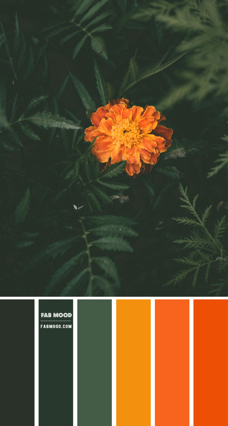 Forest Green and Burnt Orange Color Scheme – Color Palette #77