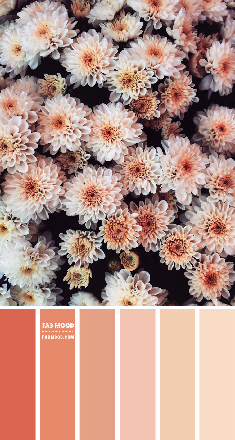 Peach Tones Colour Palette #81