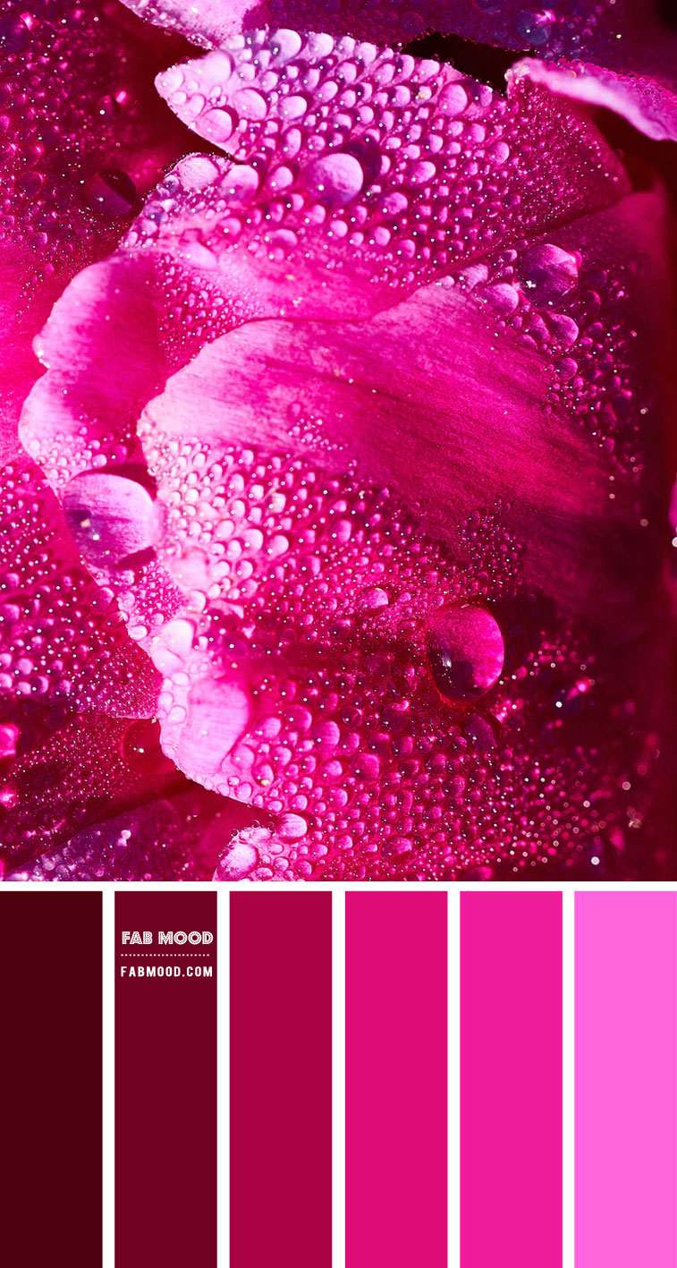 Dark Pink and Magenta Colour Palette #85