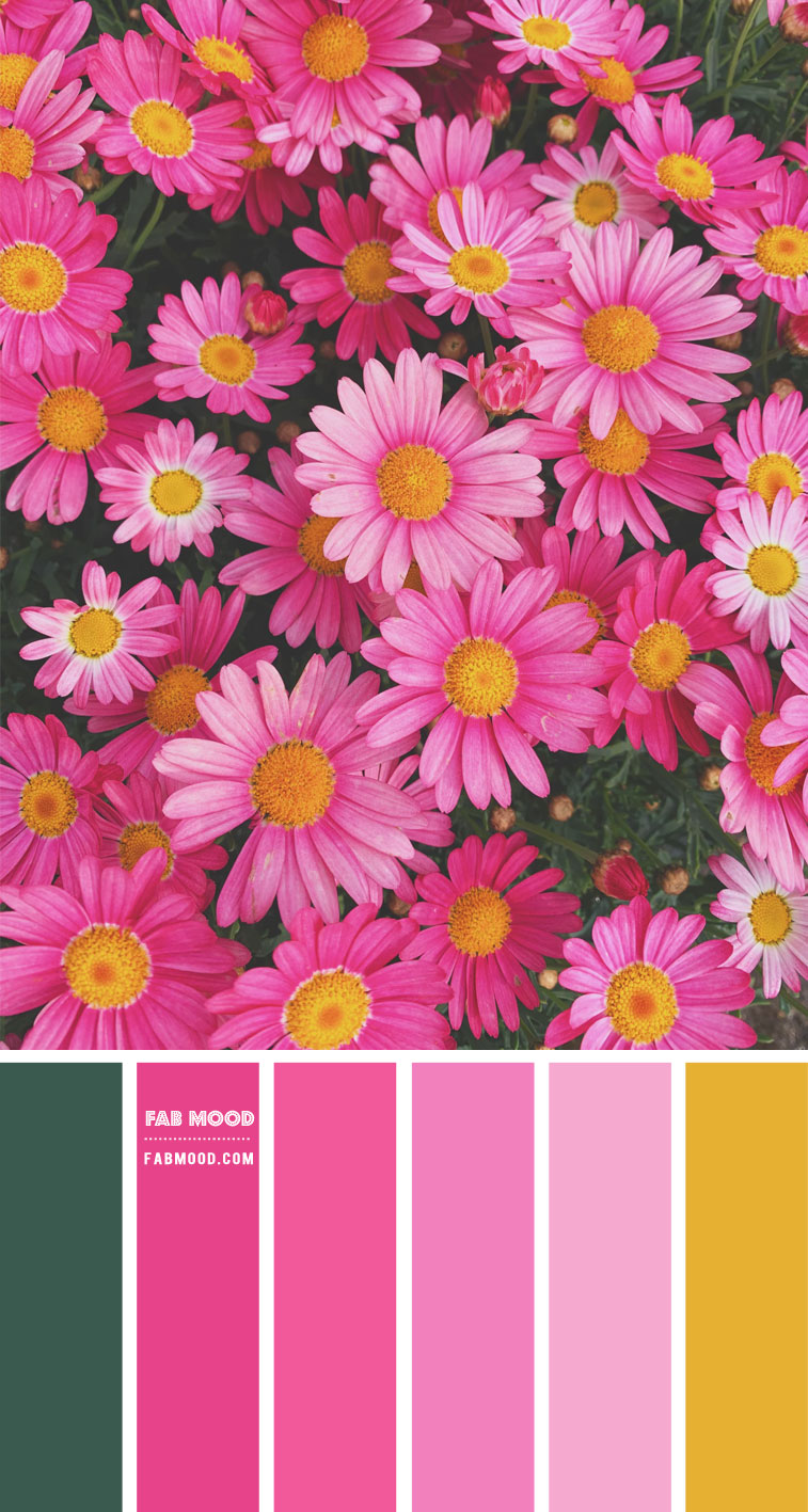 bright pink, bright pink and mustard yellow, bright pink and mustard color palette, bright pink color combination , hot pink and yellow color scheme, pink and yellow color scheme #color