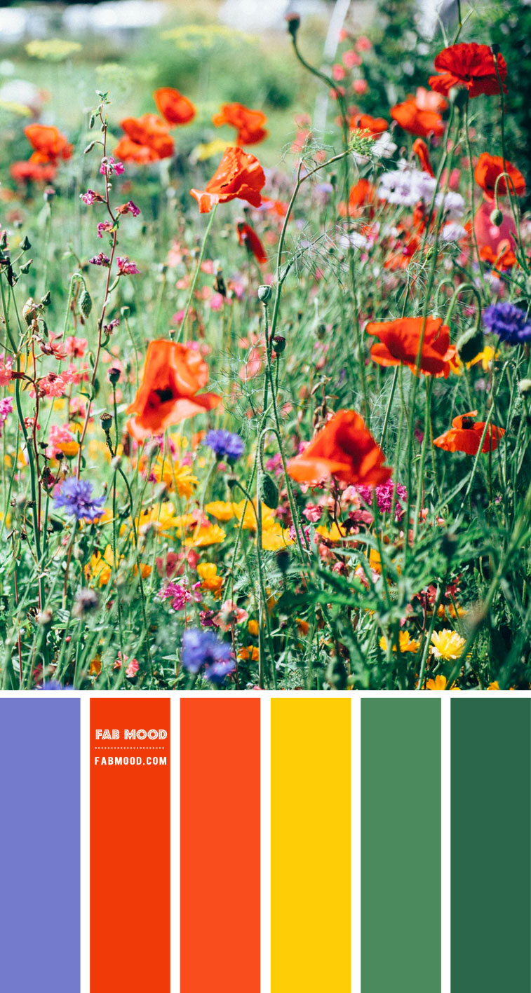 Blue, Bright Orange, Green and Yellow Colour Combo – Colour Palette #95
