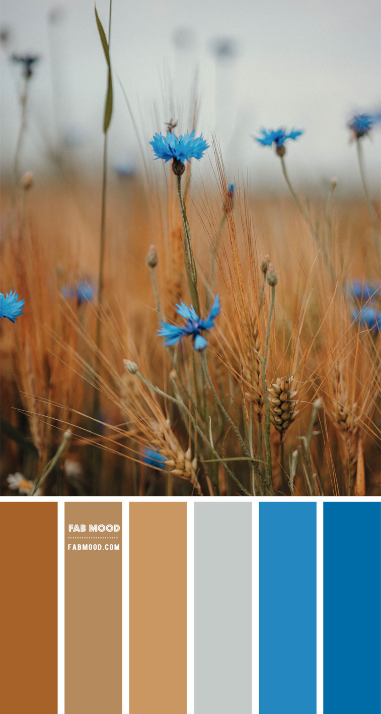 corn flower and wheat, blue and brown color scheme, blue and brown color combo, blue and brown color combination, corn flower and wheat color palette #color #colorpalette