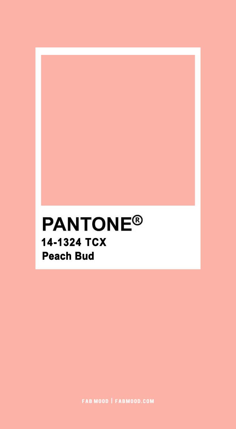 peach pantone, pantone peach, pantone peach colour