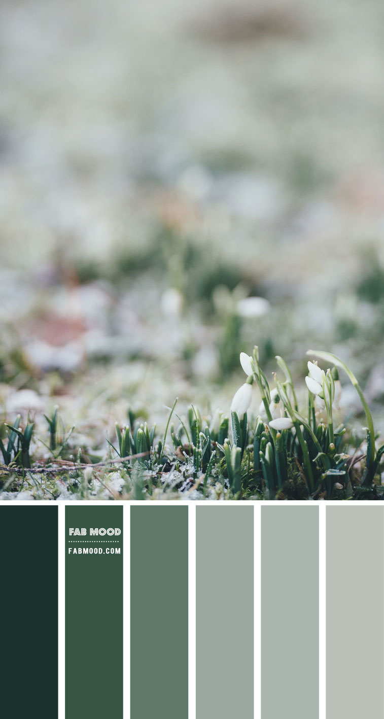 Shades of Green Colour Scheme – Colour Palette 135