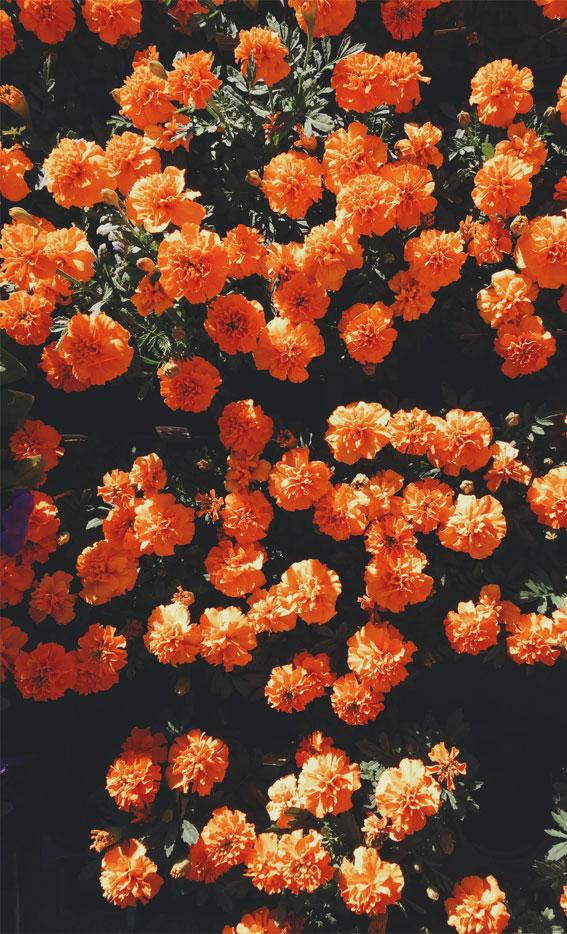 narančasta pozadina, narančasta pozadina estetska, dizajn narančaste pozadine, narančaste pozadinske slike, pozadina za iPhone, narančasta pozadina, narančasti screensaver, narančasti zidni kolaž, pozadina
