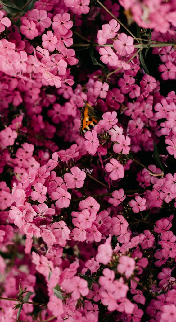 proljetna estetska tapeta, proljetna estetika, ružičasta estetska tapeta, proljetna pozadina, slatka pozadina, pozadina za iphone, cvjetna estetika, proljetni screensaver, proljetna pozadina, proljetna pozadina za iphone