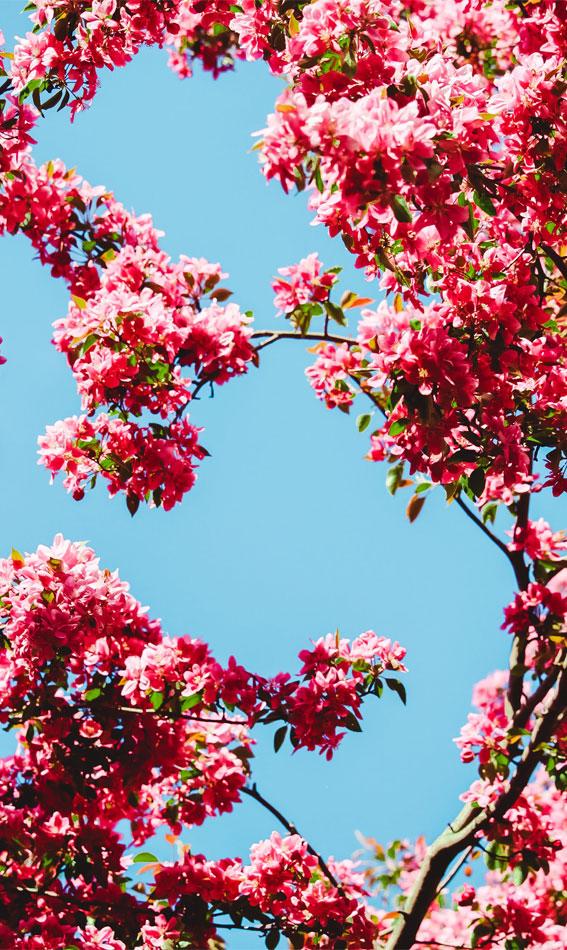 spring aesthetic wallpaper, spring aesthetic , pink aesthetic wallpaper, spring wallpaper, cute wallpaper, iphone wallpaper, flower aesthetic, spring screensaver , spring background, spring iphone background