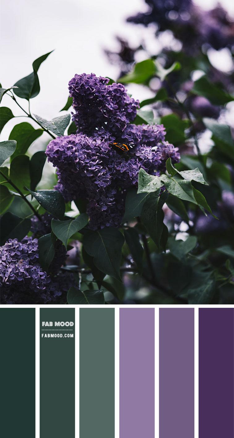 Green and Purple Colour Combination – Colour Palette 138